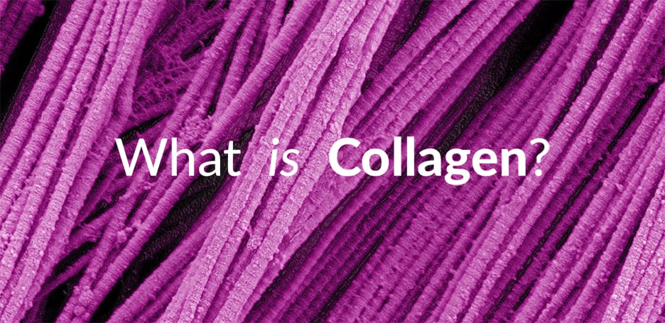 What is Collagen? – The Building Blocks of Your Skin (scanning electron microscopy of collagen fibers)