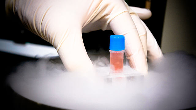 Stem Cells being removed from cryogenic storage