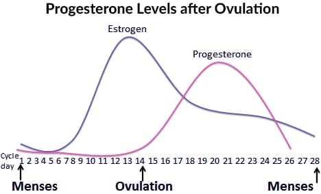 Progesterone levels after ovulation are a cause of hormonal acne