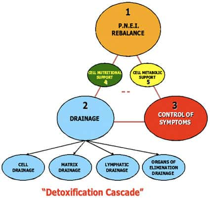 Detoxification Cascade